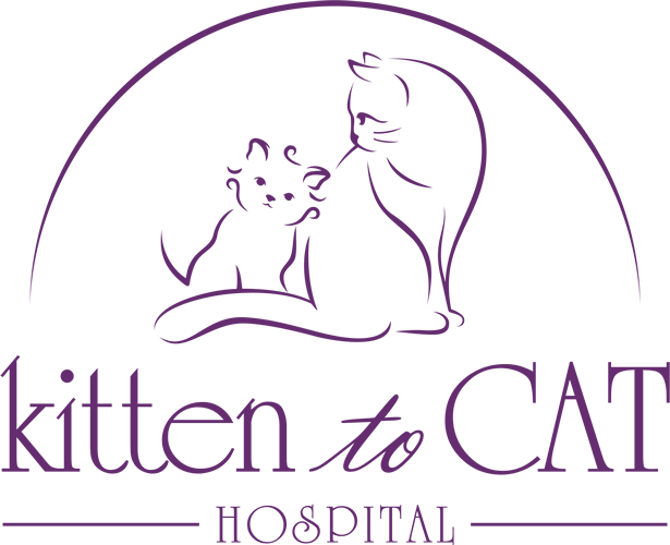 Kitten to Cat Hospital